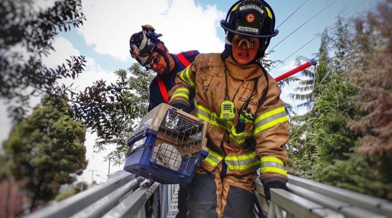 Conoce al grupo BRAE, encargado del rescate de los animales en emergencias