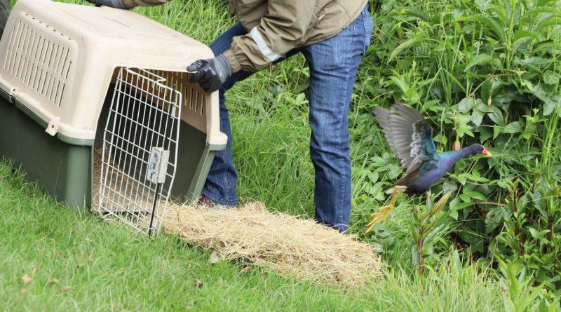 Con liberación de aves y una culebra, Distrito conmemora el Día Mundial de la Vida Silvestre