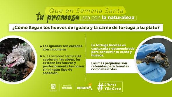 Secretaría de Ambiente hace un llamado a los ciudadanos para que no consuman, adquieran o traigan especies silvestres en esta Semana Santa