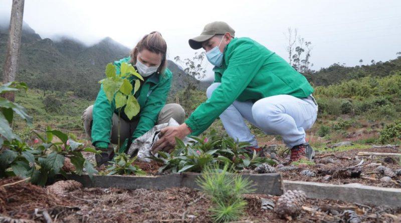 Con plantación de 1200 nuevos árboles reverdecen los Cerros Orientales de Bogotá