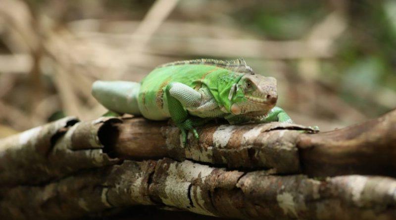 Ruta de la libertad: más de 1960 animales silvestres fueron liberados por la Secretaría de Ambiente en el Meta